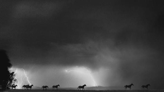 barbara-van-cleve-horses-lightning-620.jpg