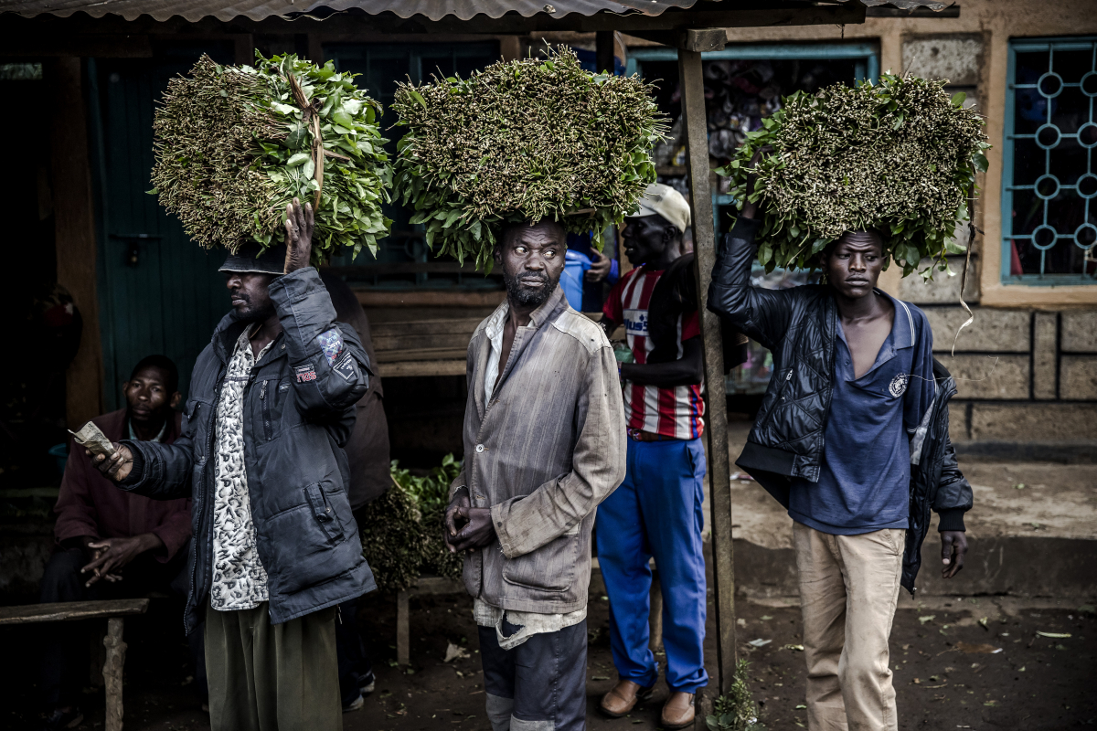 Farmers arrive to sell their fresh miraa to resellers in Maua. MUST CREDIT: Photo for The Washington Post by Luis Tato Photo by: Luis Tato — For The Washington Post