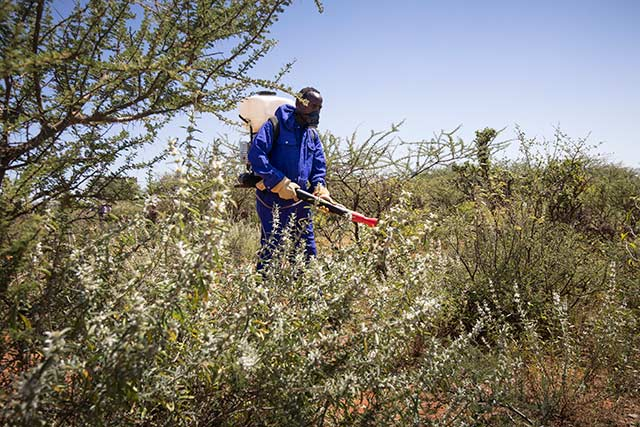 Belgium contributes to FAO and the Government of Ethiopia's desert locust control operations in affected and at-risk areas