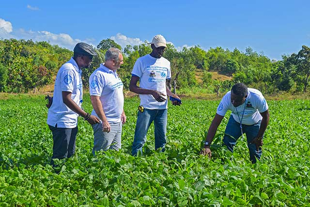 Belgium and FAO support the Government of Haiti to improve the livelihoods of drought-affected households in the North-East