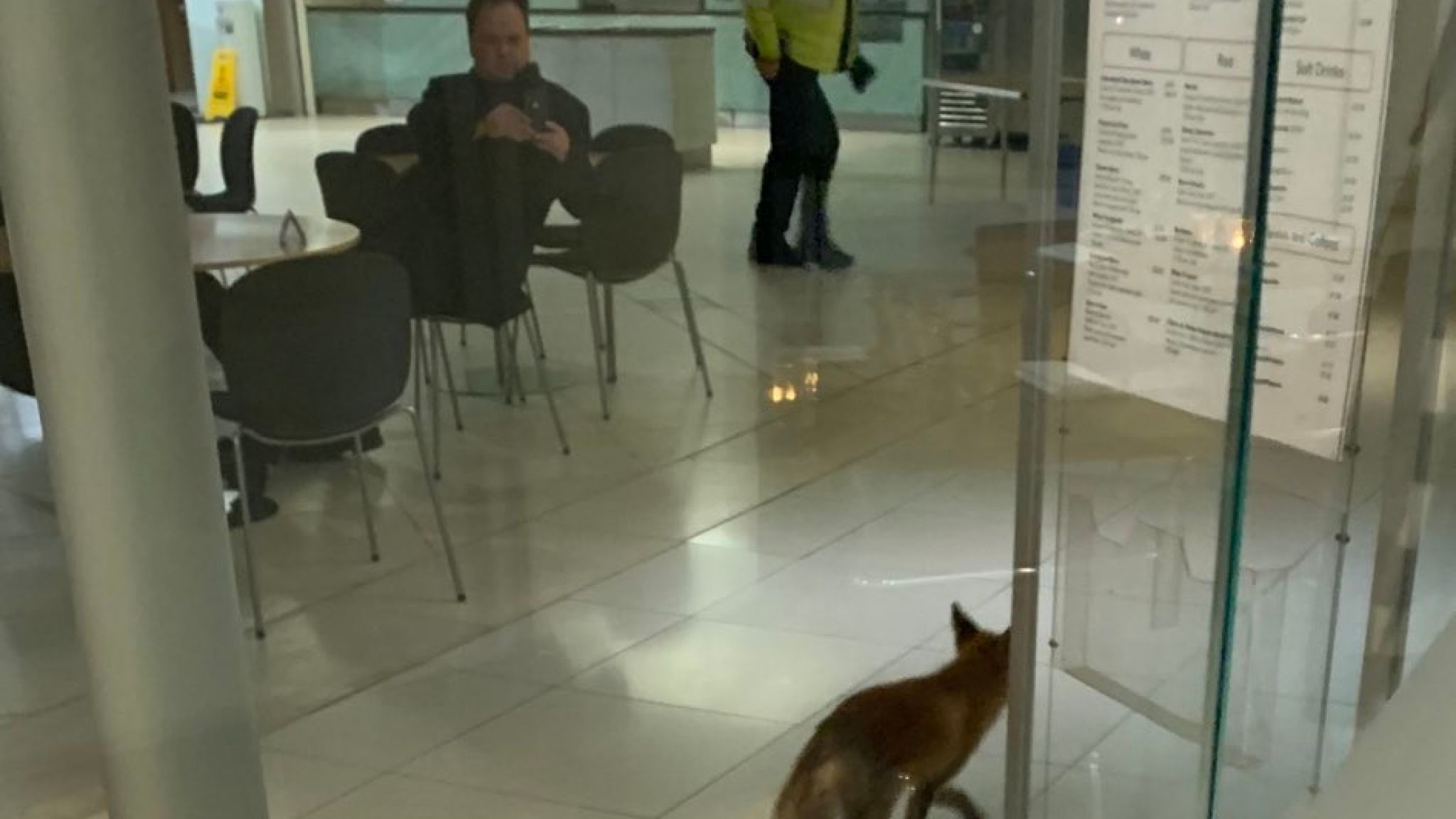 Fox spotted near one of the cafes in Portcullis House, parliament