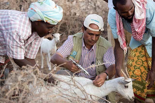Somalia approves new Livestock Sector Development Strategy