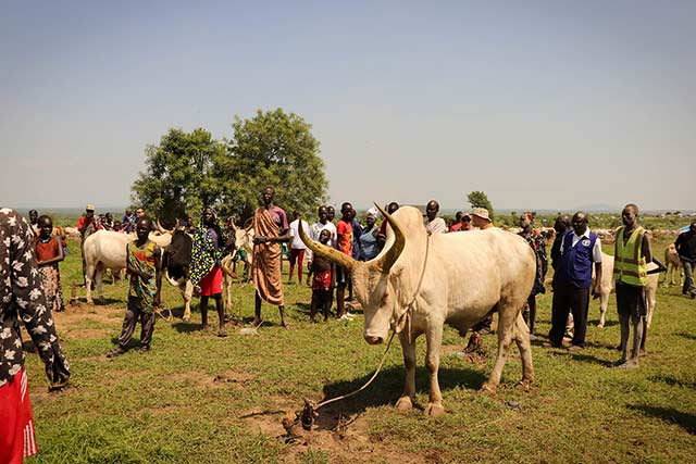 Visit to the Gumba Shirikat Cattle Camp