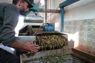 Syrian agricultural production drops massively as conflict continues