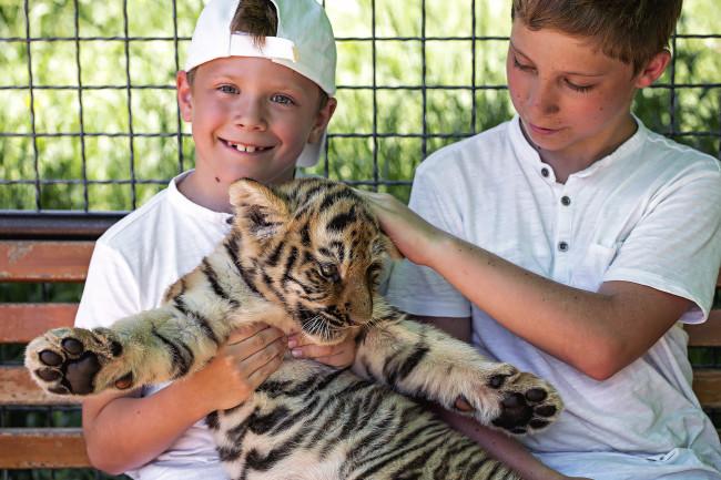 petting a tiger cub - shutterstock