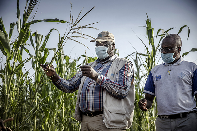 FAO's new programme aims to mitigate the immediate impacts of the COVID-19 pandemic while strengthening the longer-term resilience of food systems and livelihoods.