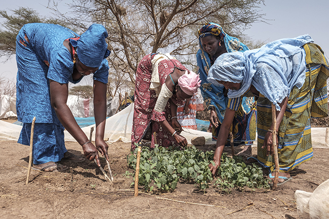 Implementing anticipatory actions to mitigate the impacts of COVID-19 on food supply chains and safeguard the livelihoods and food security of vulnerable farming families.