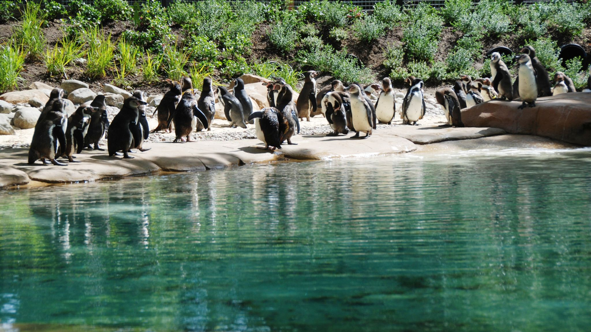 The future of penguins and many other animals at London Zoo will be uncertain if the site is forced to close
