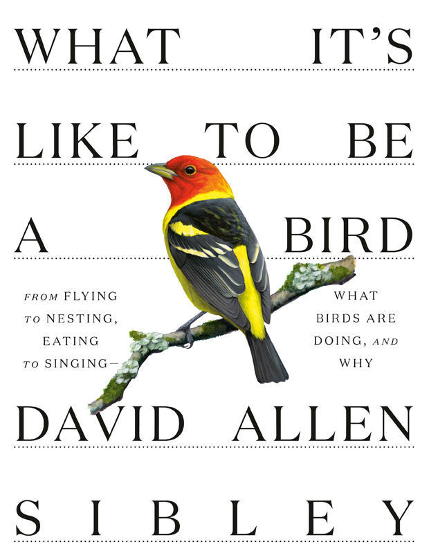 what-its-like-to-be-a-bird-knopf-620.jpg