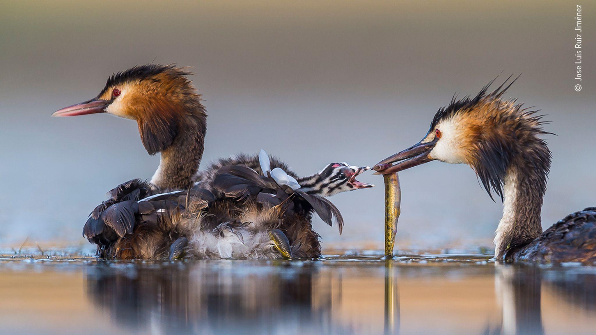 © Jose Luis Ruiz Jiménez/ Wildlife Photographer Of The Year 2020