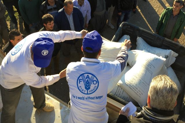 Iraq | FAO and Belgium expand partnership to enhance the resilience of internally displaced and returnee farming households impacted by COVID-19