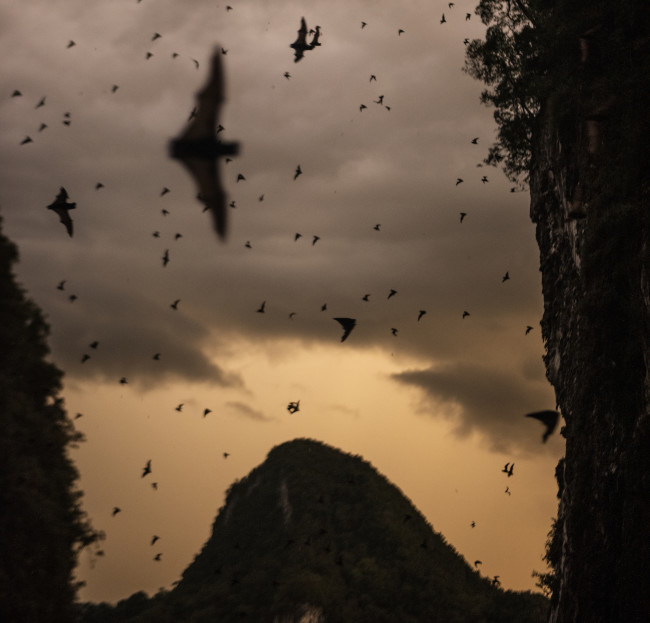 "Bats and birds are common reservoirs for viruses that can ""spill over"" to people—often during encounters in the wild. (Credit: NatGeo/Carsten Peter)"