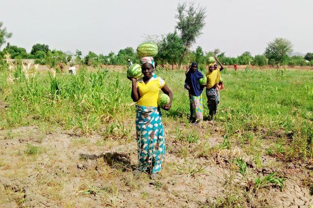 Prés de 2.7 millions de personnes en insècurité alimentaire et nutritionnelle au Cameroun