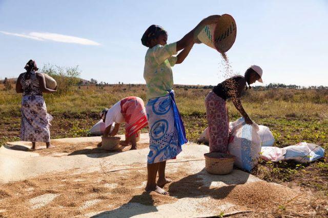Farmers at work in Madagascar. ©FAO/Yasuyoshi Chiba