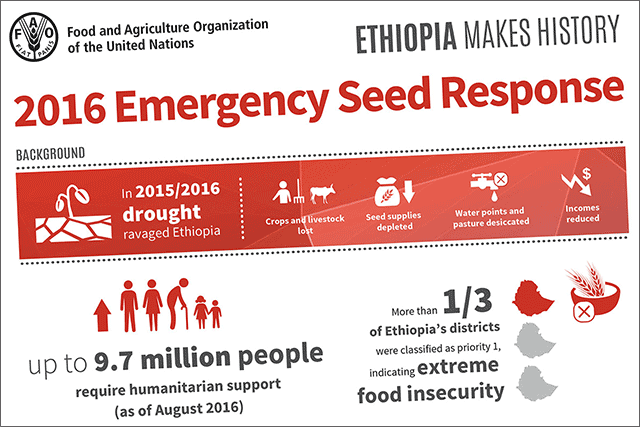 Ethiopia's historic seed campaign - INFOGRAPHIC
