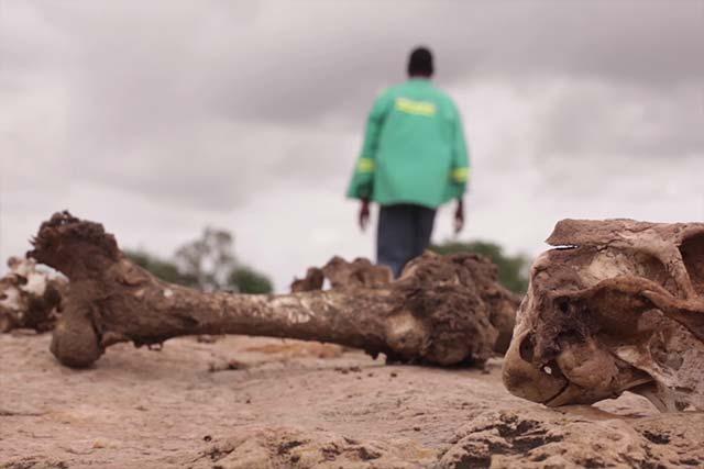 Responding to the El-Niño in Zimbabwe
