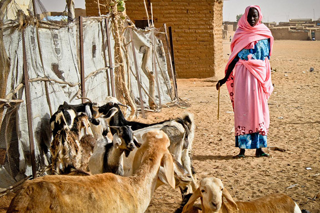 Peste des Petits Ruminants control and fresh water aqua production projects signed to support the livestock and fisheries sector development