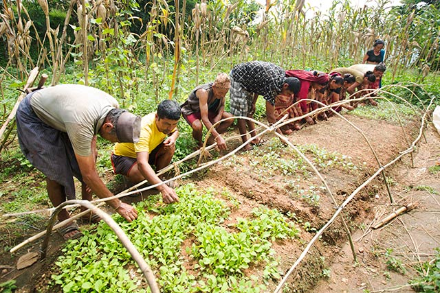 Six months after the Nepal earthquakes: FAO continues to support building the resilience of affected farmers