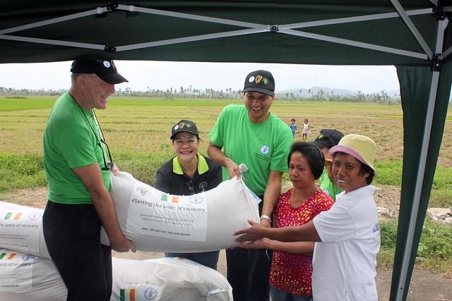 Distributing rice