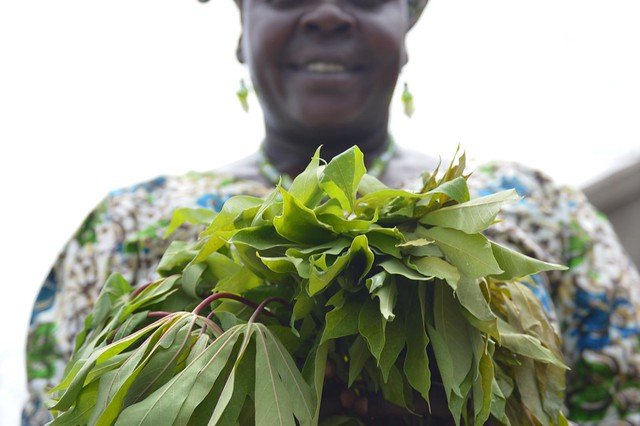 The potential of africulture in South Sudan
